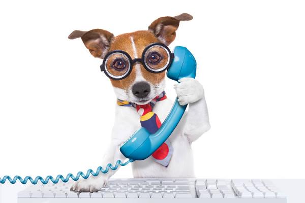 Hund telefoniert