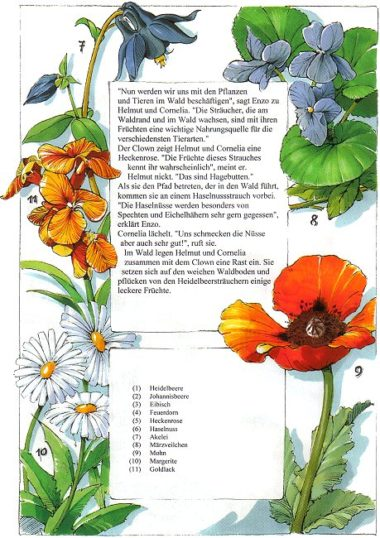 Naturbuch Blumen